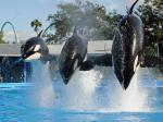 Hannity's Bullying Isn't A Persuasive Argument For Sea World