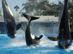 SeaWorld And Its Terrible, Horrible, No Good, Very Bad Week