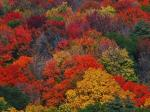 Open Thread - How's The Autumn Colors Where You Are?