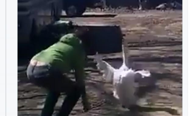 When You Are Loved By A Goose