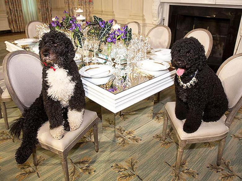 Right-Wing In Freakout Mode Over Obama's Dogs, Suggest Decapitating President And First Lady