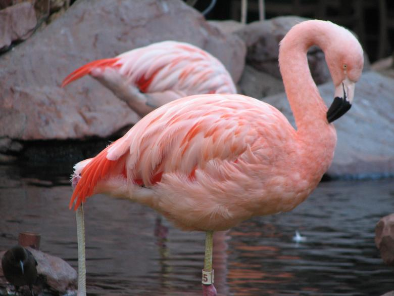 Pair Of Flamingos Die After Fraternity Initiation Prank