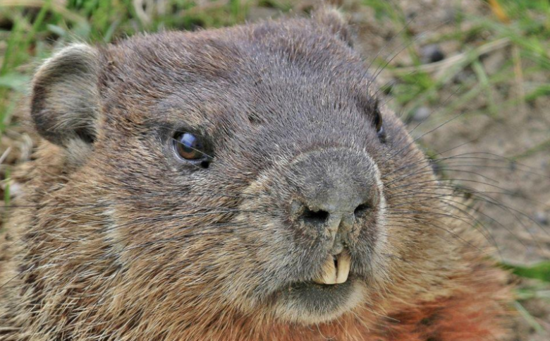 House Republicans Are Living Their Own Groundhog Day