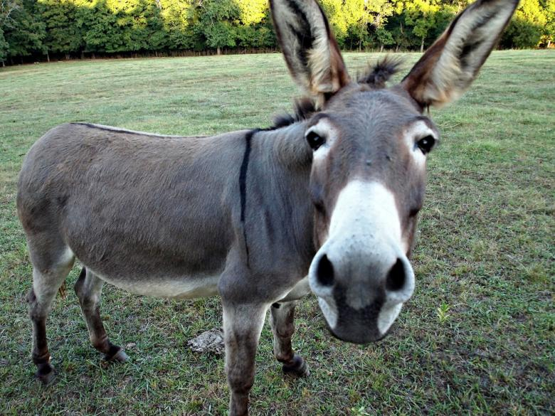 Politics And Reality Radio: An Oligarchy Run By Jackasses?
