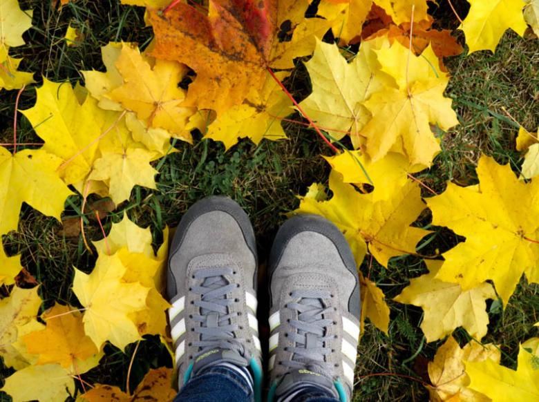 Great News For Lazy People: Leave The Leaves