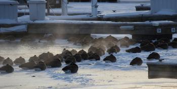 Weakened 'Polar Vortex' Blamed For N. American Chill