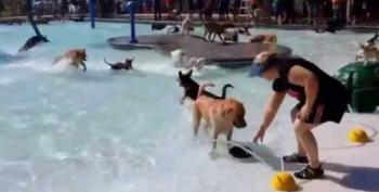 Open Thread:  Puppy Pool!