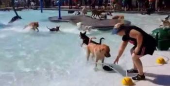 Open Thread:  Puppy Pool!