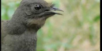 Open Thread -  One Amazing Bird