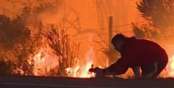 Man Risks Safety In Thomas Fire To Save Wild Rabbit From Flames