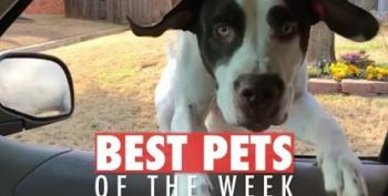 Open Thread - Pets Of The Week!