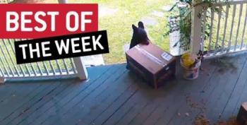 This Week's Viral Videos Feature 'Where The Buffalo Roam'