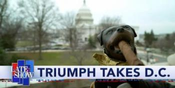 Triumph The Insult Comic Dog Visits The Senate During Impeachment