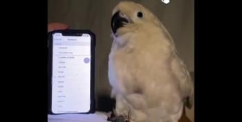 This Parrot Dancing To Ringtones Is What We All Need Today