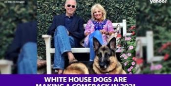 A 'Statement' From Biden's Dog, Major