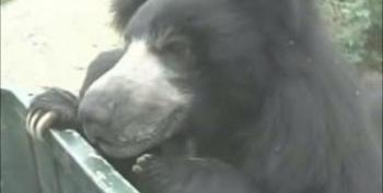 India's Last Dancing Bear Freed