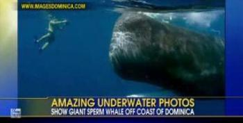 Daring Photographer Gets Up-close View Of Sperm Whales