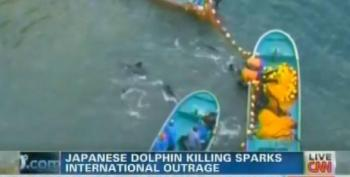 Japan Proceeds With Largest Taiji Dolphin Massacre In Years