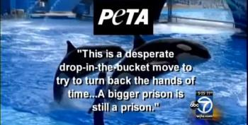 Hurt By 'Blackfish' Documentary, SeaWorld Announces Changes To Orca Pens