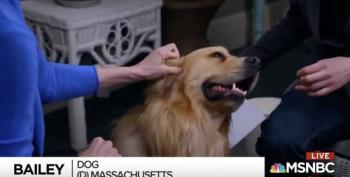 Elizabeth Warren's Dog Bailey Ends Rachel Maddow's Interview