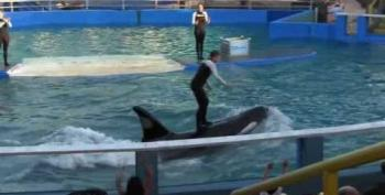 Lolita And Freedom: Feds' Orca Decision Shifts The Tide
