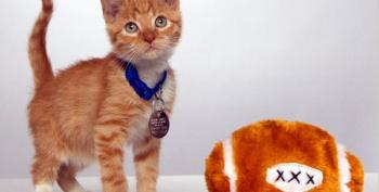 2014 Kitten Bowl On Hallmark Channel