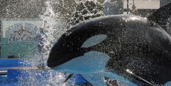 California Legislator Proposes Outlawing Orca Shows, Ending Captivity