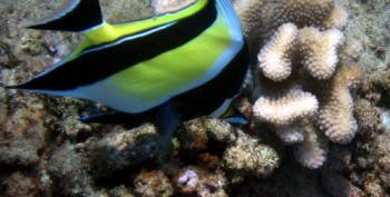 Time Running Out For Great Barrier Reef: Scientists