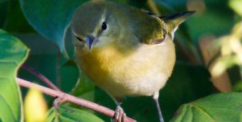 Open Thread - Bird Life