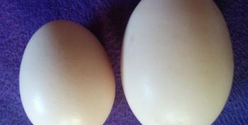 Avian Flu Outbreak Spurs Egg Rationing Across Country