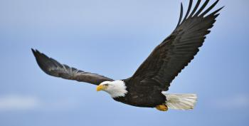 Our Stupid House Of Representatives Goes After Migratory Birds
