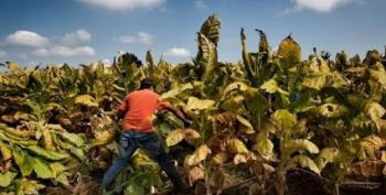 Virginia GOP Halts Bill To Stop Child Labor On Tobacco Farms