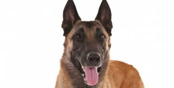 A Readers Guide To Secret Service Dogs