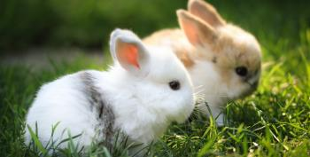 Right Wing Blog Charges Young Hillary Was Fierce Protector Of Baby Bunnies