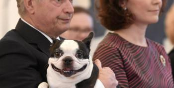 Finland's 'First Dog' Wins The Internet