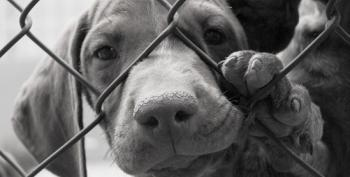 USDA APHIS Pulls Access To Essential Animal Welfare Database