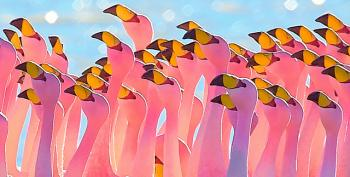 Open Thread - Pink Flamingos!