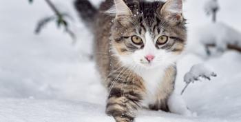 Open Thread: Combine Cats With Metal Lyrics, Serve Hot