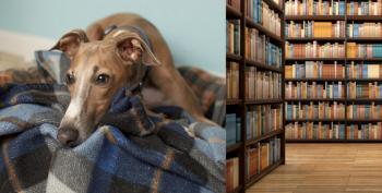 'Sad' Dog Looking For Kids To Read To Him Is Now All Booked Up