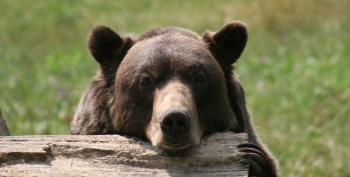 Watch Out, Baby Bears! Trump Wants You Dead