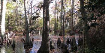 What The World Needs Now To Fight Climate Change: More Swamps