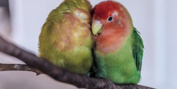 Trump Obsesses On 'FBI Lovebirds' While Ignoring Coronavirus