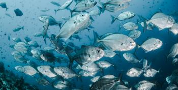 Trump Signs Executive Order Greenlighting 'Corporate Takeover Of Oceans'