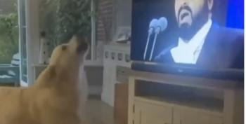 Goodest Doggo Sings Along To Pavarotti