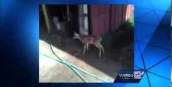 Armed Agents In Wisconsin Raid Animal Shelter For Baby Deer