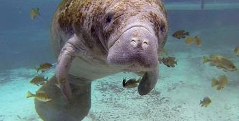 Actor Dave Bautista Adds $20,000 To Reward For Case Of Manatee With 'TRUMP' Scraped On Back