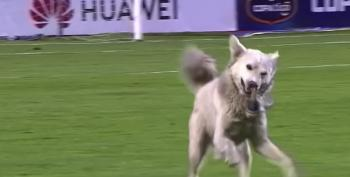 Soccer Match Interrupted By Canine Shenanigans