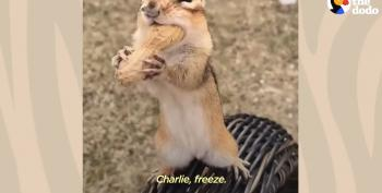 Charlie The Chippy Chipper