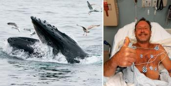 'Oh My God, I'm In A Whale's Mouth': Lobster Diver Survives Fluke Incident