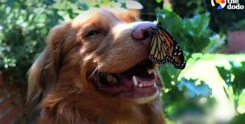Milo The Butterfly Whisperer
